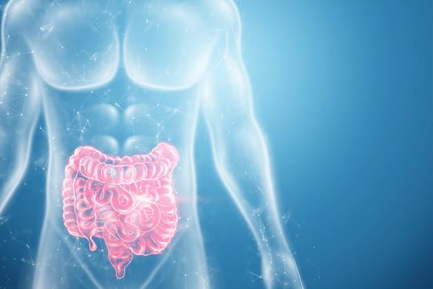 Ilustração colorida de corpo humano transparente com intestino destacado na cor vermelha.